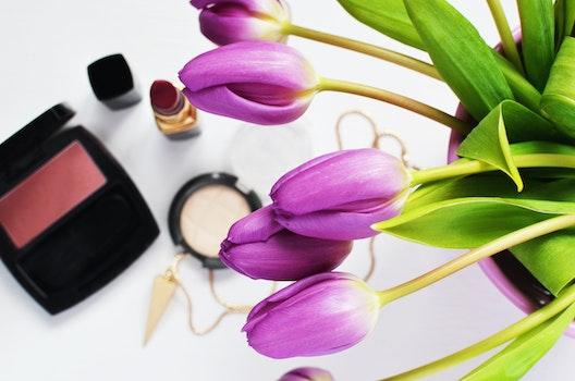 Kostenloses Stock Foto zu makeup, schönheit, lippenstift, make-up