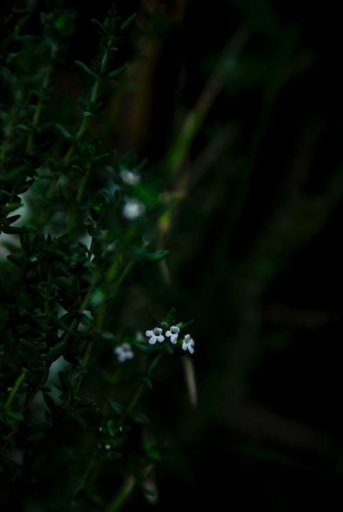 คลังภาพถ่ายฟรี ของ ดอกไม้, ดอกไม้สีขาว, พืช, พื้นหลังสีดำ