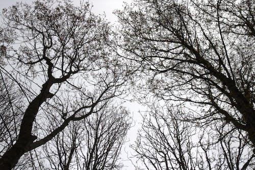 Fotos de stock gratuitas de arbol alto, arboles, árboles altos, blanco y negro