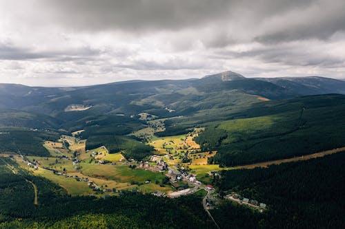 Immagine gratuita di alberi, ambiente, avventura, campagna