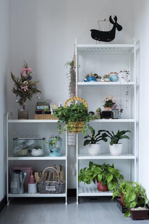Fotos de stock gratuitas de adentro, armario, arreglo floral, casa