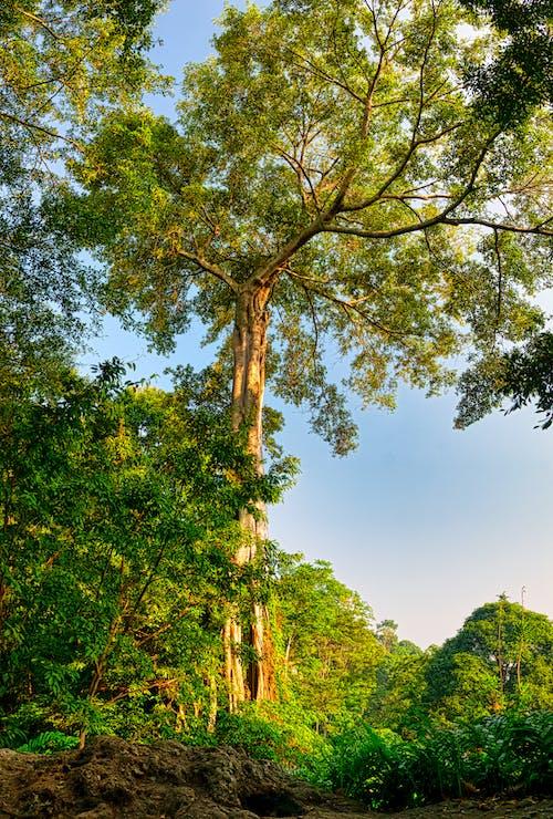 Foto stok gratis alam, cabang, di luar rumah, hutan
