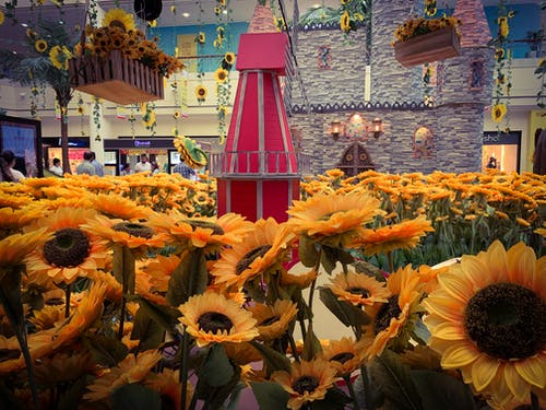 mobilechallenge, 向日葵, 室內, 攝影 的 免費圖庫相片