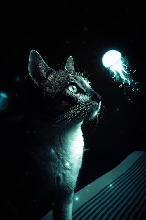 Foto d'estoc gratuïta de adobe, Adobe Photoshop, art, brillar