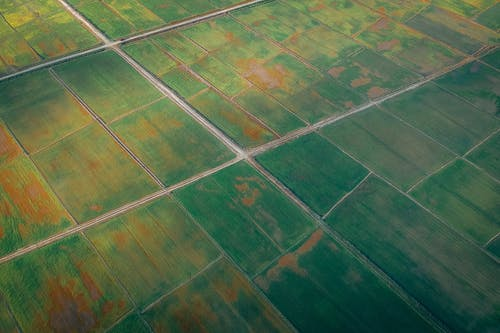 Aerial Shot Of Cropland