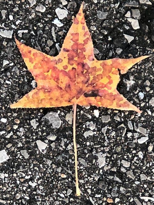 Fotobanka sbezplatnými fotkami na tému chodník, jeseň, list, listy