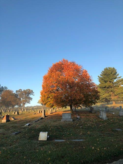 Безкоштовне стокове фото на тему «cincinnati, кладовище, надгробний двір, надгробок»
