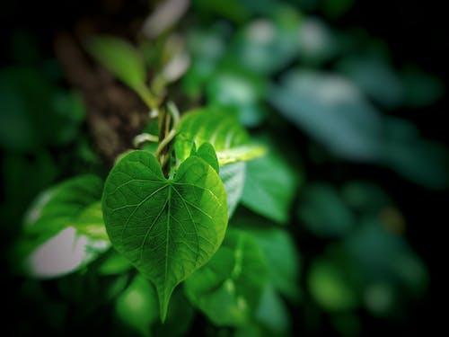 Immagine gratuita di bellezza nella natura, foglia, foglia di primo piano, foglia verde