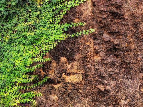 Immagine gratuita di aggiungi su, aggiungi testo, bellezza nella natura, messaggio testuale