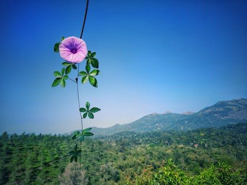 Free stock photo of beautiful flower, beautiful sky, flower, nature