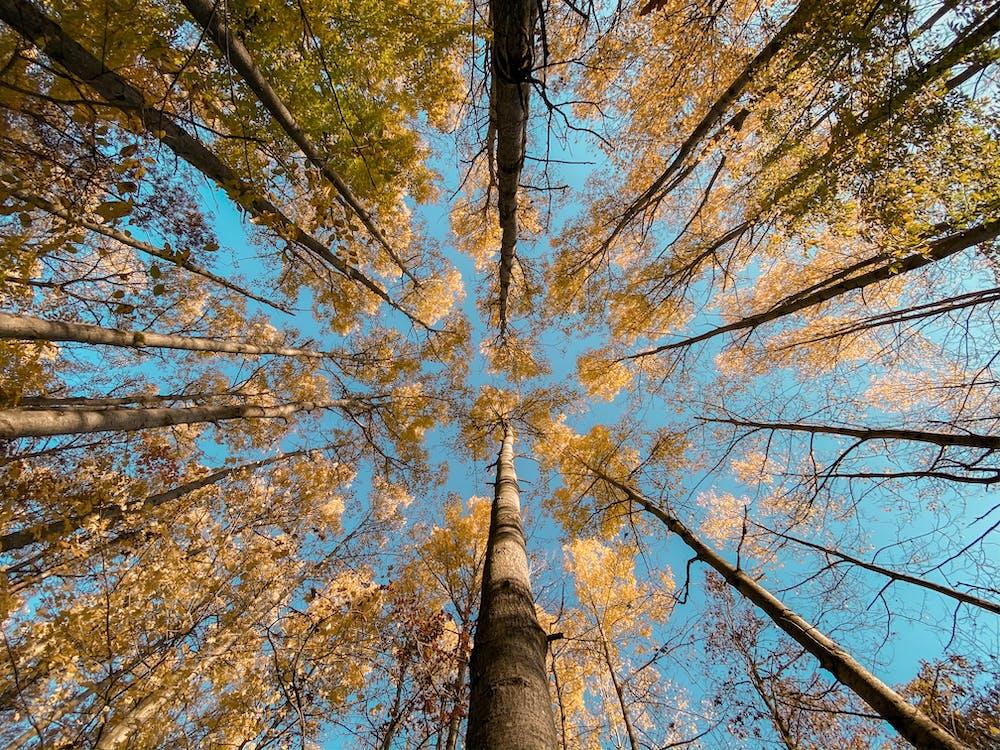 sky, trees