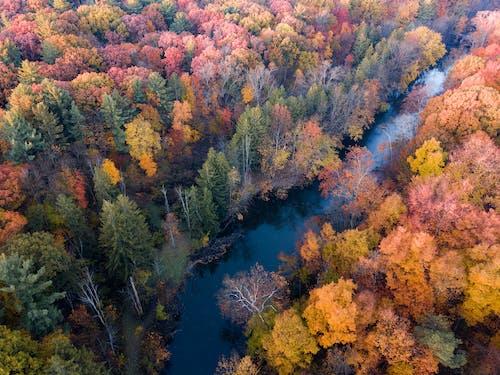 Ilmainen kuvapankkikuva tunnisteilla joki, putoaminen, puut, Syksy