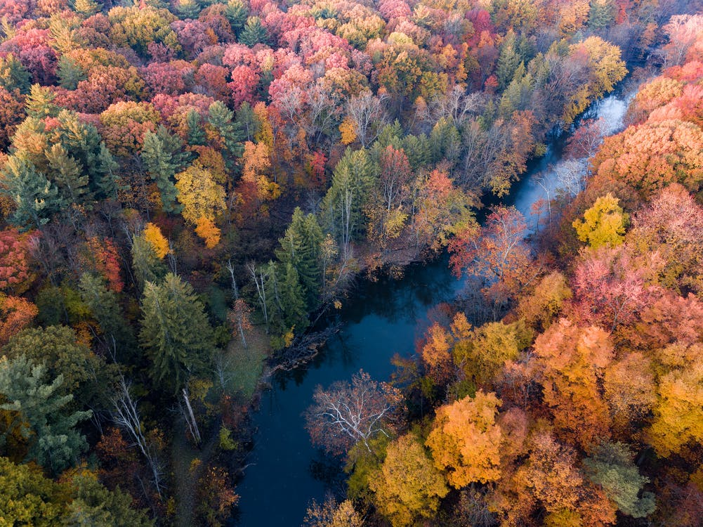 autumn, autumn color, fall