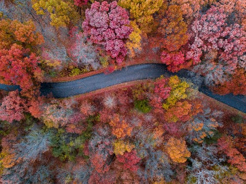 Aerial Photograph of Concrete Road Between Trees