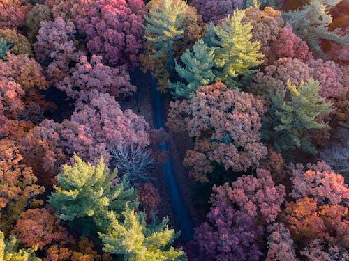 ağaçlar, büyüme, çevre, doğa içeren Ücretsiz stok fotoğraf