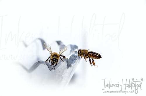 Free stock photo of bees, honey bees, honeybee, honeybees
