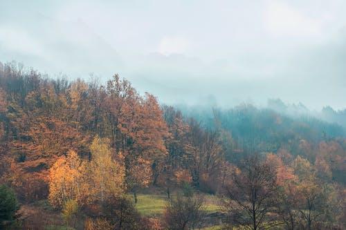 Ảnh lưu trữ miễn phí về biếu, bong bóng màu đỏ, bụng bé, buổi sáng sương mù