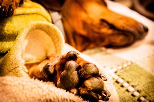 Foto profissional grátis de cachorro, cão, pata