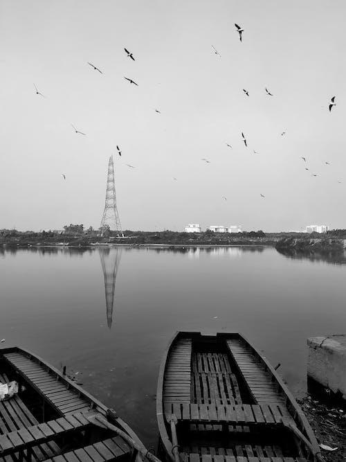 Gratis arkivbilde med båt, elvebredd, fugler, streetphotography