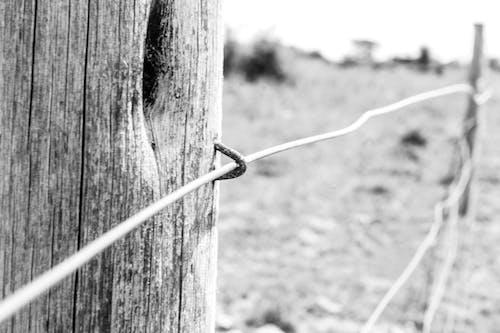 Gratis lagerfoto af fægte, flagstang, hegnstang, sort/hvid fotografi