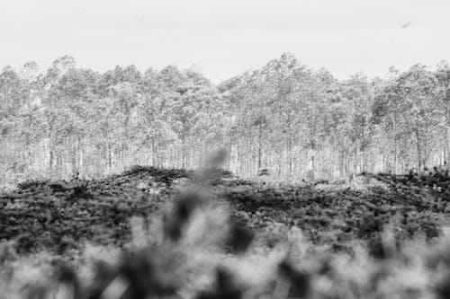 Gratis lagerfoto af skov, sort/hvid fotografi, tæt skov, træer