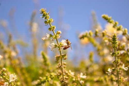 Foto profissional grátis de abelha, abelhas, fauna, flora