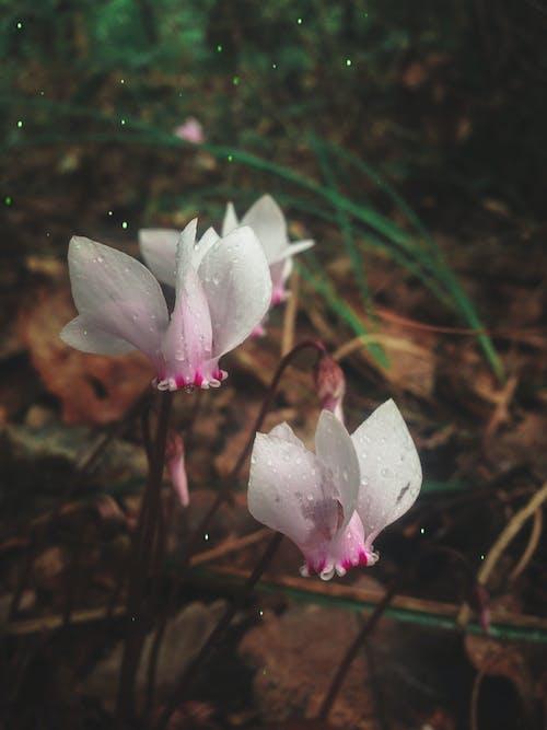Ingyenes stockfotó gyönyörű virágok, nagy sebességű fényképezés, természet, természetfotózás témában