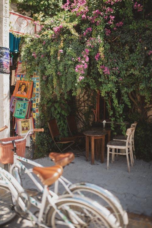 Gratis lagerfoto af blomster, bord, cykler, dagslys