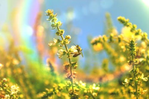 Foto profissional grátis de abelha, abelhas, buganvília, primavera