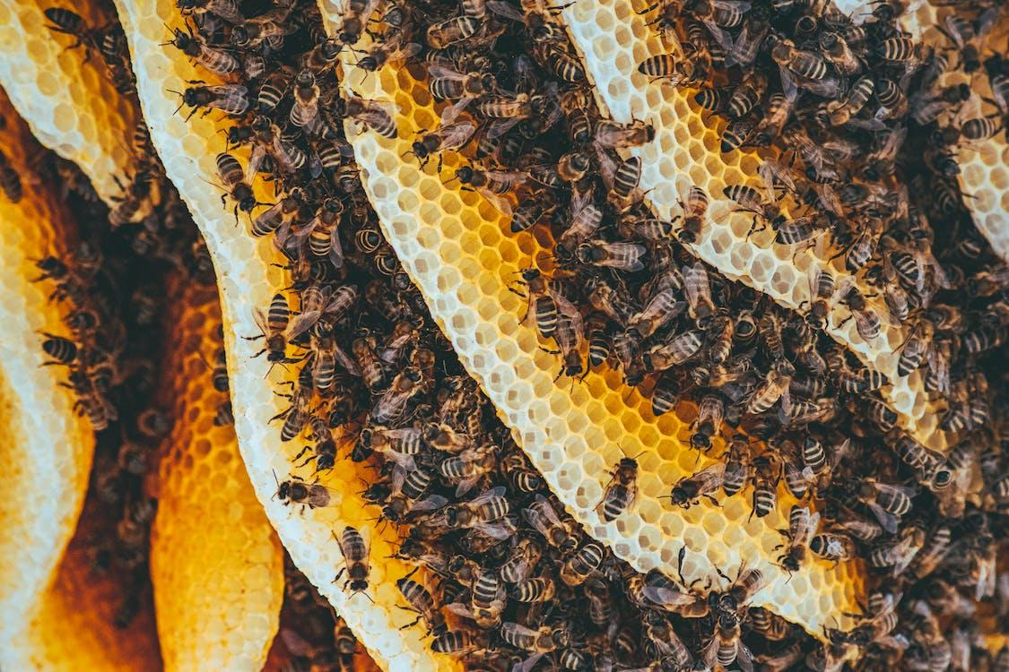 Ingyenes stockfotó közelkép, makrófotózás, méh témában