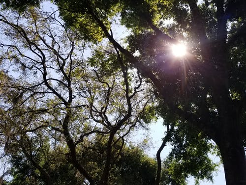 Free stock photo of sunlight, tall trees, trees