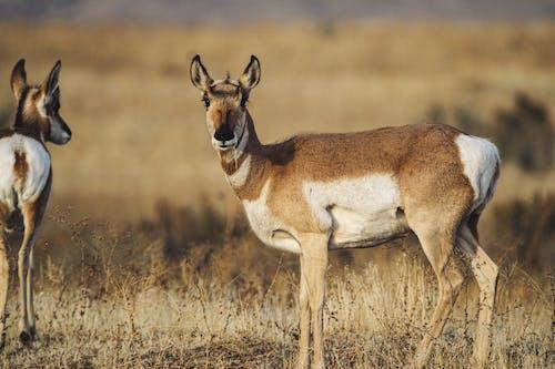 Photos gratuites de alerte, animal sauvage, animaux, brun