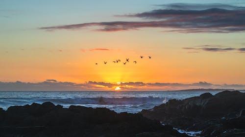 Free stock photo of big bay, Cape Town, coastline, migrating birds