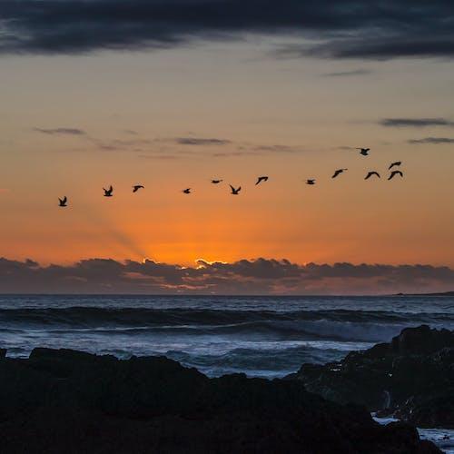 Photos gratuites de coucher de soleil, grande baie, Le Cap, littoral