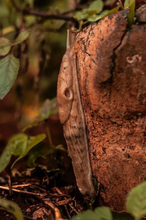 Ảnh lưu trữ miễn phí về ốc, thảm thực vật