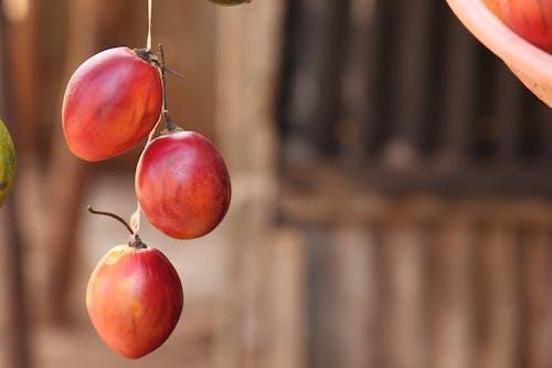 Free stock photo of africa, african, fruits, Kenya