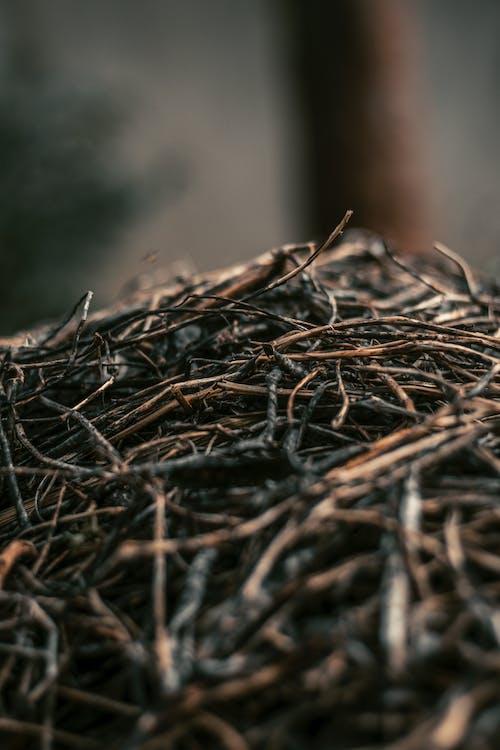 Ảnh lưu trữ miễn phí về đậu, khô, lá đậu, lá mùa thu