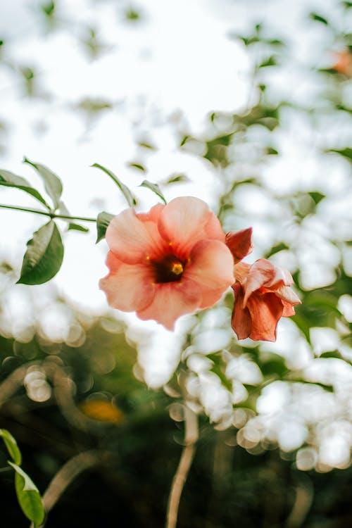 คลังภาพถ่ายฟรี ของ กลีบดอก, การเจริญเติบโต, กำลังบาน, ปาร์ค