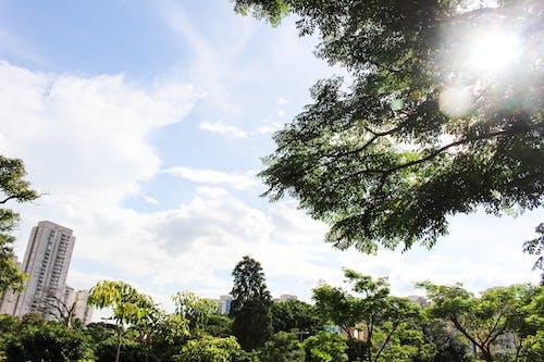Darmowe zdjęcie z galerii z słońce