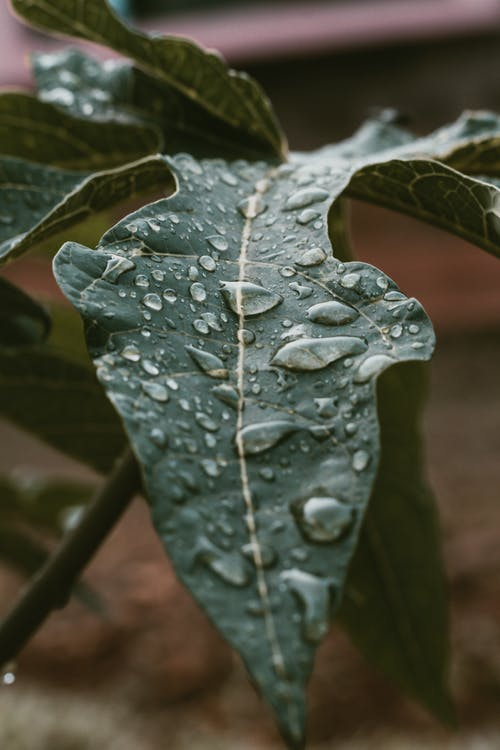 Close-up Photo of Green Leaf With Waterdrops
