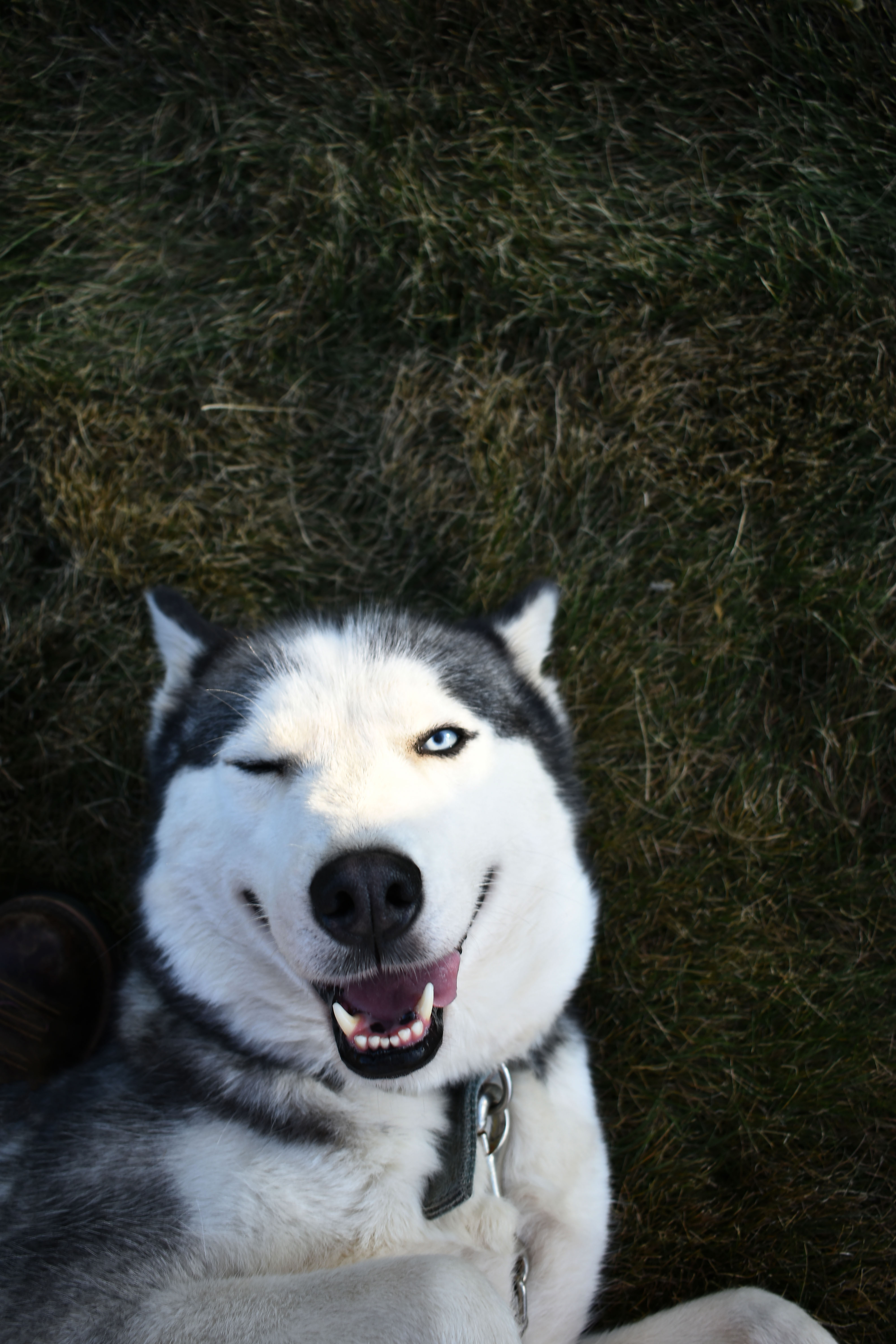 photo of dog lying down on grass