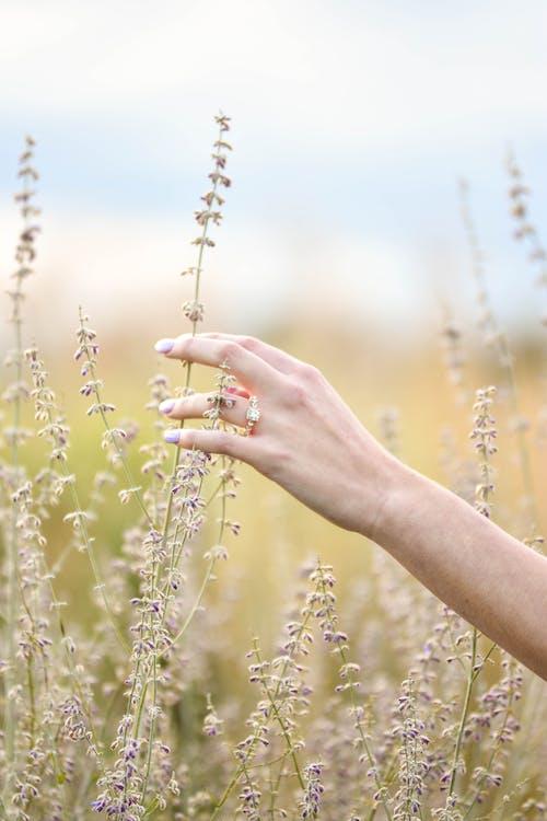 Ảnh lưu trữ miễn phí về #nhẫn, cánh đồng, đàn bà, hệ thực vật