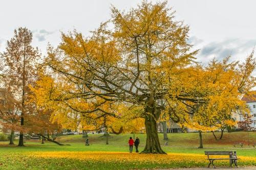 Free stock photo of autumn, colors of autumn, tree