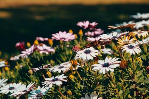 คลังภาพถ่ายฟรี ของ ดอกกุหลาบ, ธรรมชาติ, ป่า, พืช