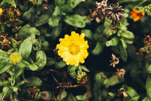 Darmowe zdjęcie z galerii z fotografia przyrodnicza, kwiaty, park, park krajobrazowy