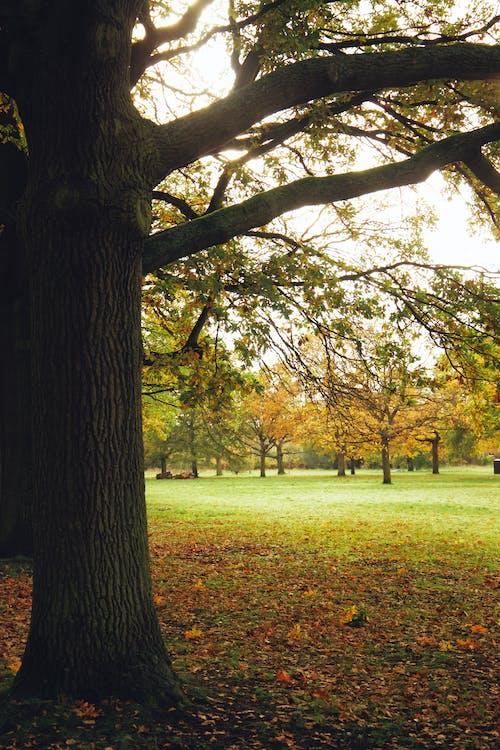 Kostenloses Stock Foto zu blumen, naturfotografie, naturpark, park