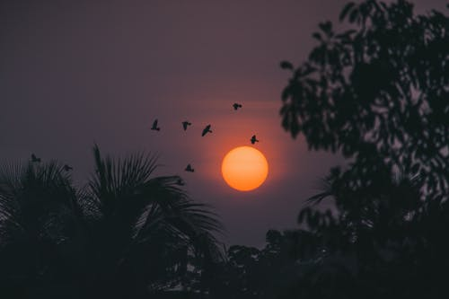 Silhouette of Birds Flying Near Trees