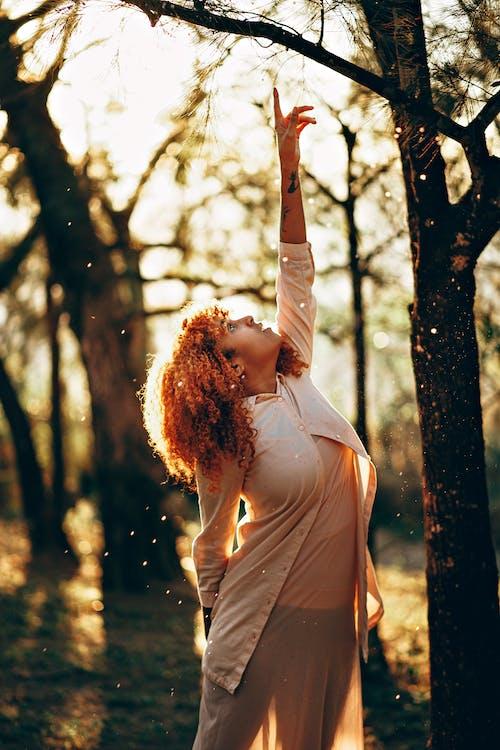 Foto d'estoc gratuïta de a l'aire lliure, apuntant, arbres, bellesa
