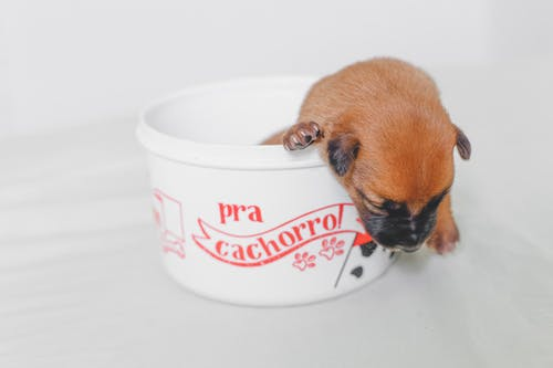 Brown and Black Puppy Inside White and Red Plastic Container