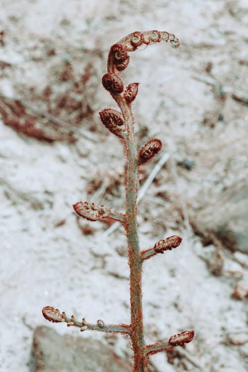 下雪的天氣, 冬季, 冷, 凍結的 的 免费素材照片